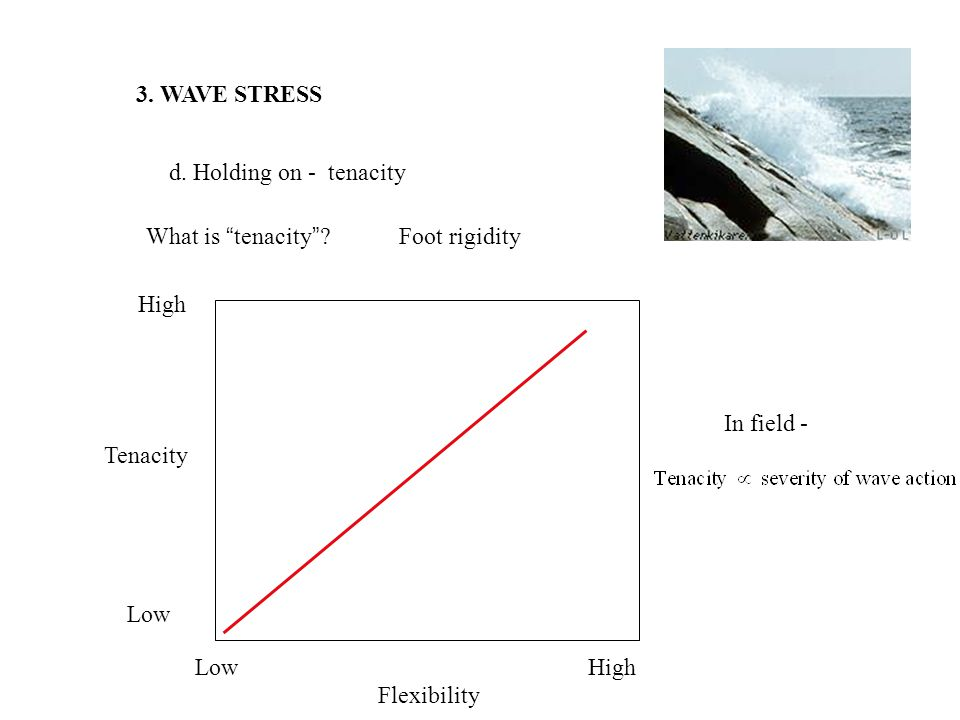 3.WAVE STRESS d. Holding on - tenacity What is tenacity .