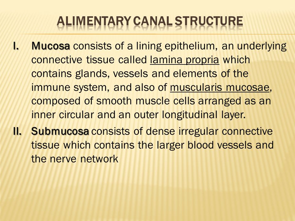 I.Mucosa I.Mucosa consists of a lining epithelium, an underlying connective tissue called lamina propria which contains glands, vessels and elements of the immune system, and also of muscularis mucosae, composed of smooth muscle cells arranged as an inner circular and an outer longitudinal layer.