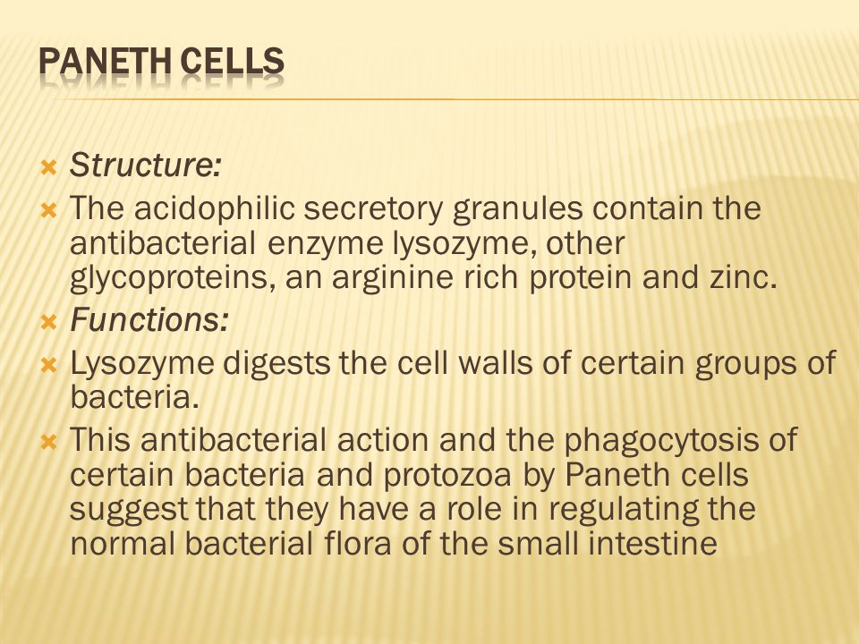  Structure:  The acidophilic secretory granules contain the antibacterial enzyme lysozyme, other glycoproteins, an arginine rich protein and zinc.