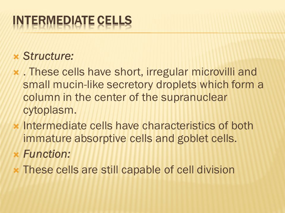  Structure: . These cells have short, irregular microvilli and small mucin-like secretory droplets which form a column in the center of the supranuc