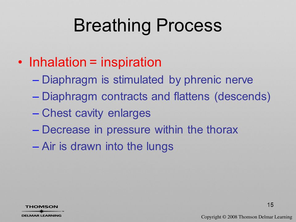 15 Breathing Process Inhalation = inspiration –Diaphragm is stimulated by phrenic nerve –Diaphragm contracts and flattens (descends) –Chest cavity enl