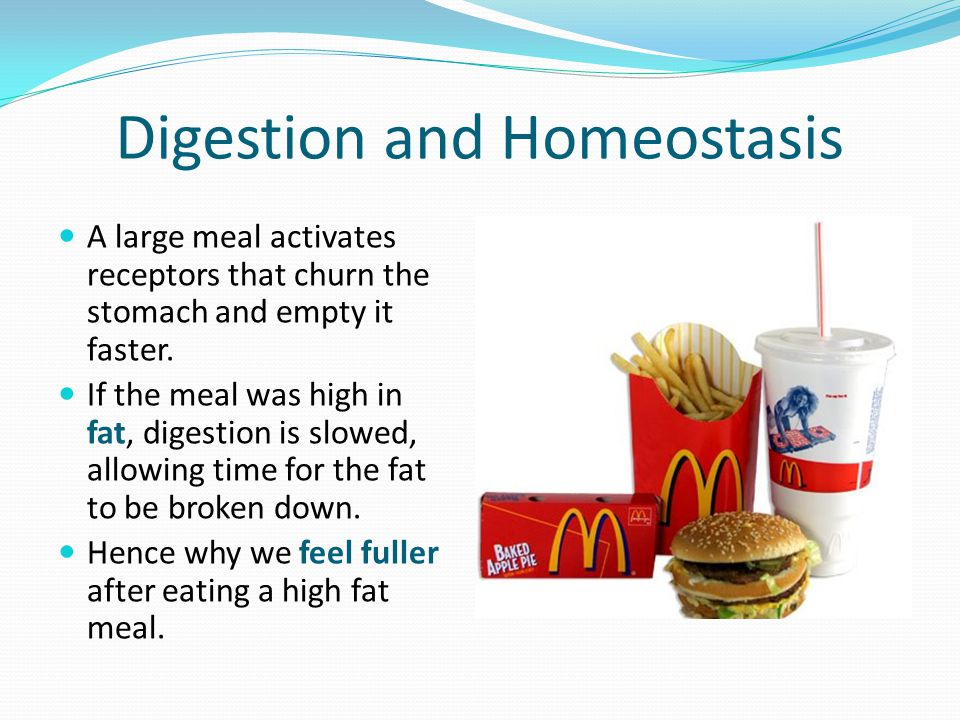 Digestion and Homeostasis A large meal activates receptors that churn the stomach and empty it faster.