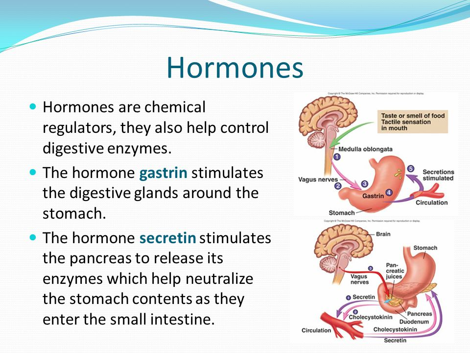 Hormones Hormones are chemical regulators, they also help control digestive enzymes.