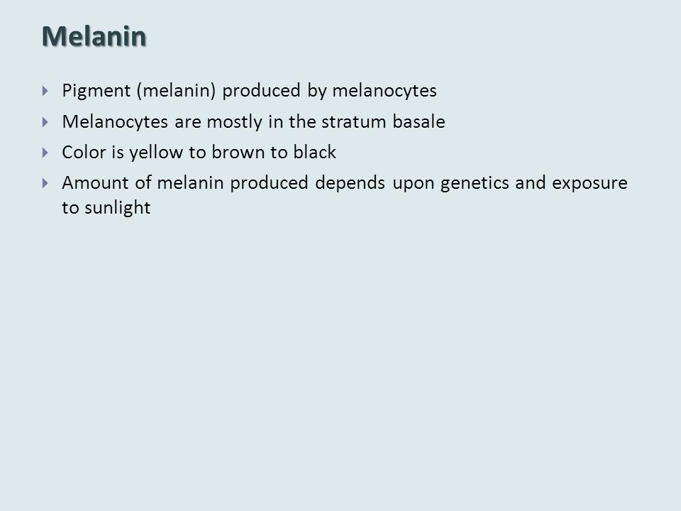 Melanin  Pigment (melanin) produced by melanocytes  Melanocytes are mostly in the stratum basale  Color is yellow to brown to black  Amount of mel
