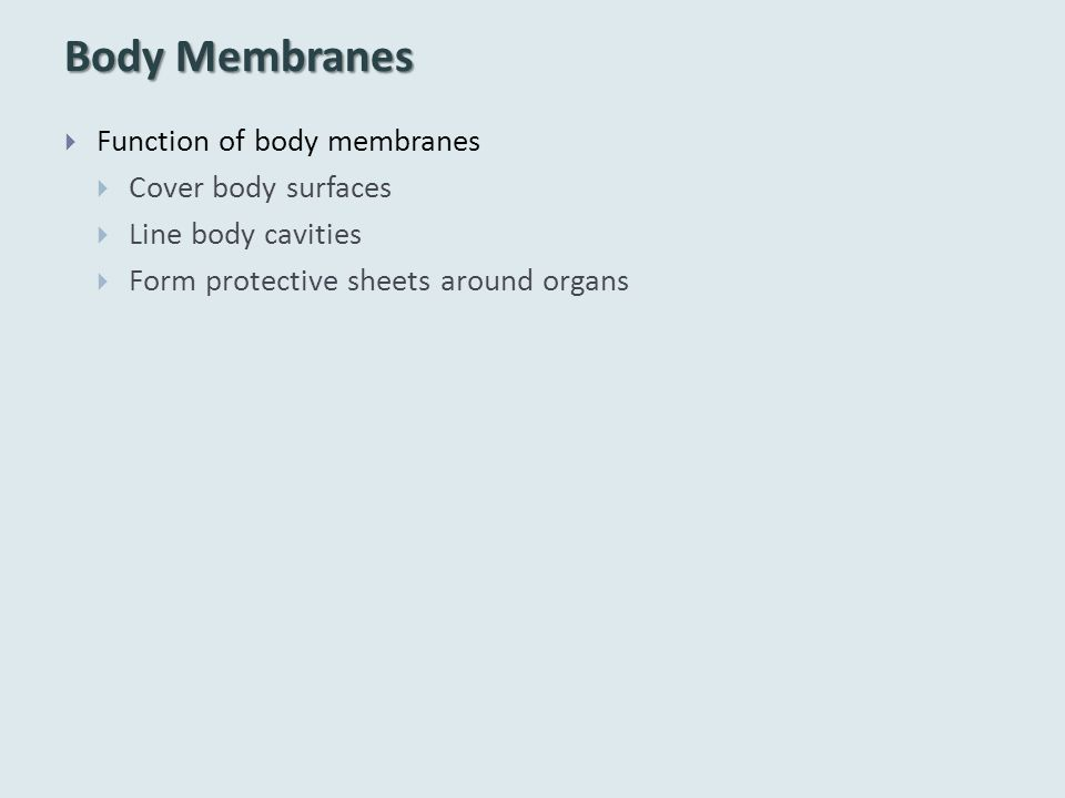 Body Membranes  Function of body membranes  Cover body surfaces  Line body cavities  Form protective sheets around organs