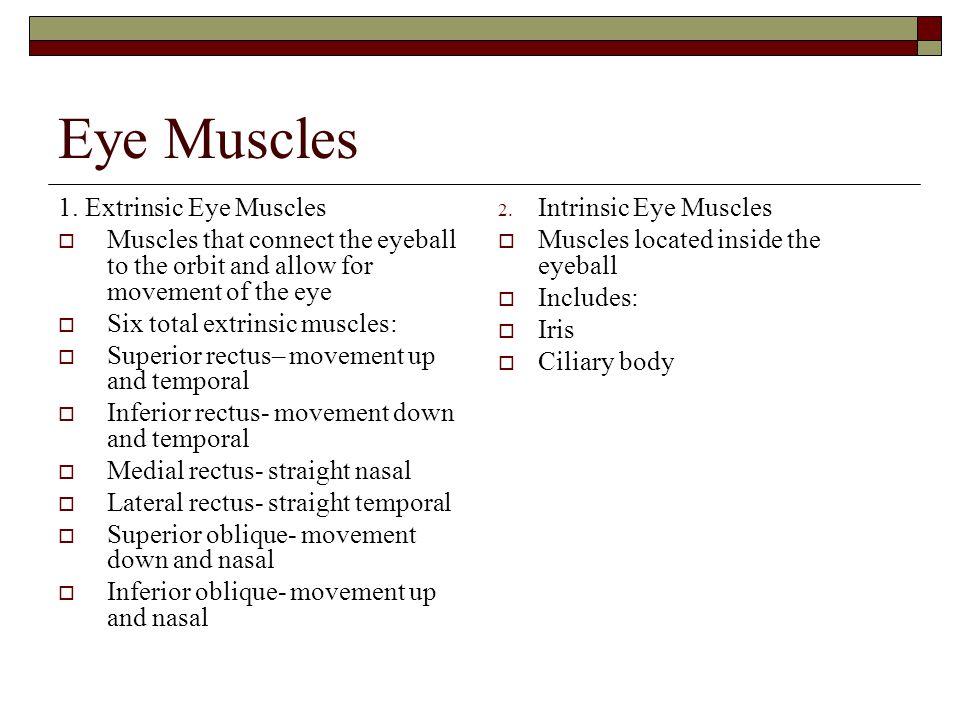 Eye Muscles 1.
