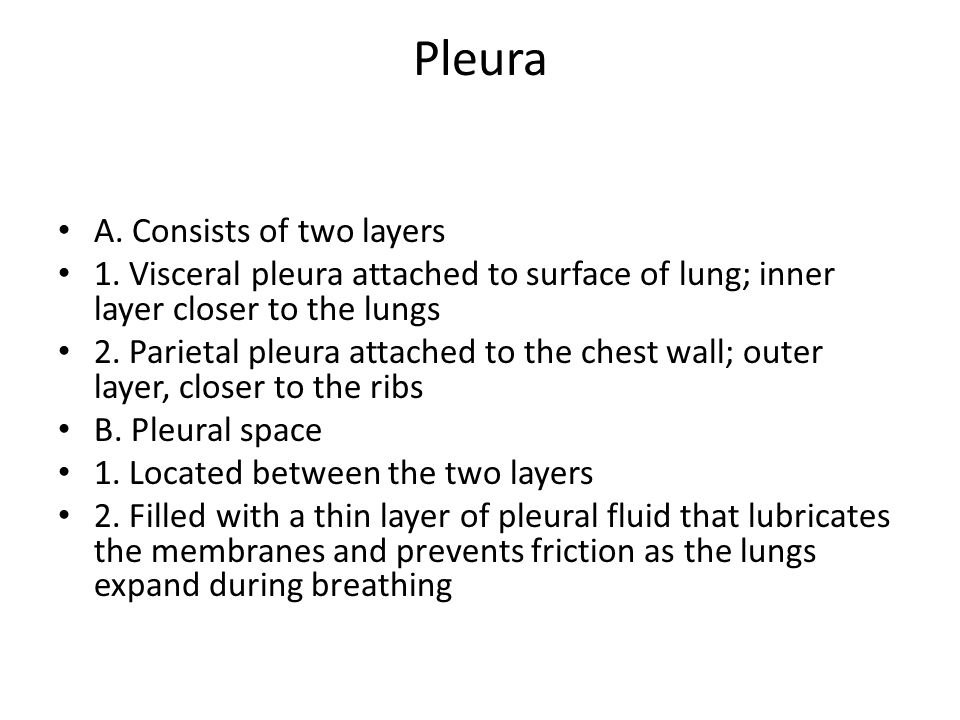 Pleura A. Consists of two layers 1. Visceral pleura attached to surface of lung; inner layer closer to the lungs 2. Parietal pleura attached to the ch