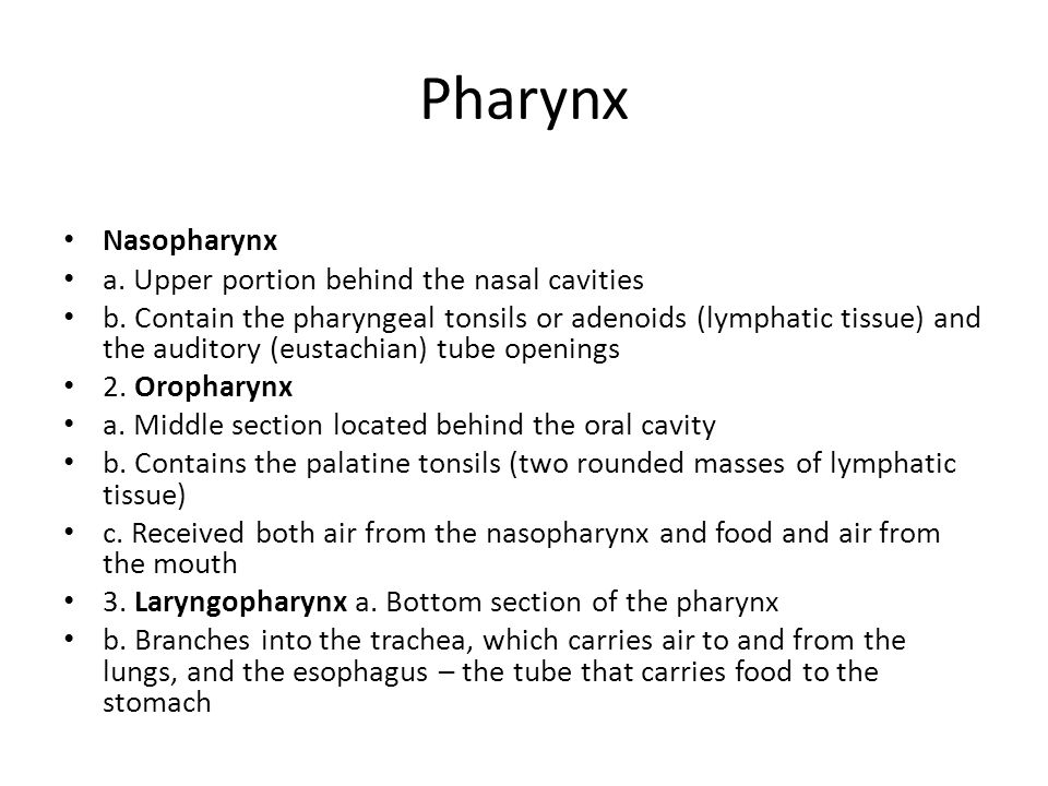 Pharynx Nasopharynx a. Upper portion behind the nasal cavities b. Contain the pharyngeal tonsils or adenoids (lymphatic tissue) and the auditory (eust