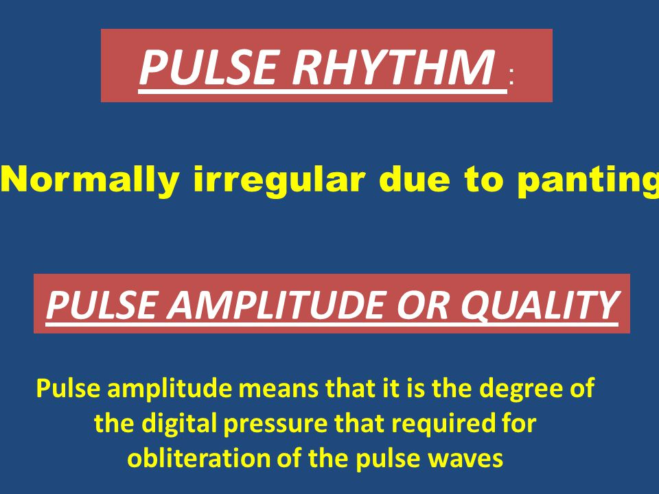PULSE RHYTHM : PULSE AMPLITUDE OR QUALITY Normally irregular due to panting Pulse amplitude means that it is the degree of the digital pressure that required for obliteration of the pulse waves