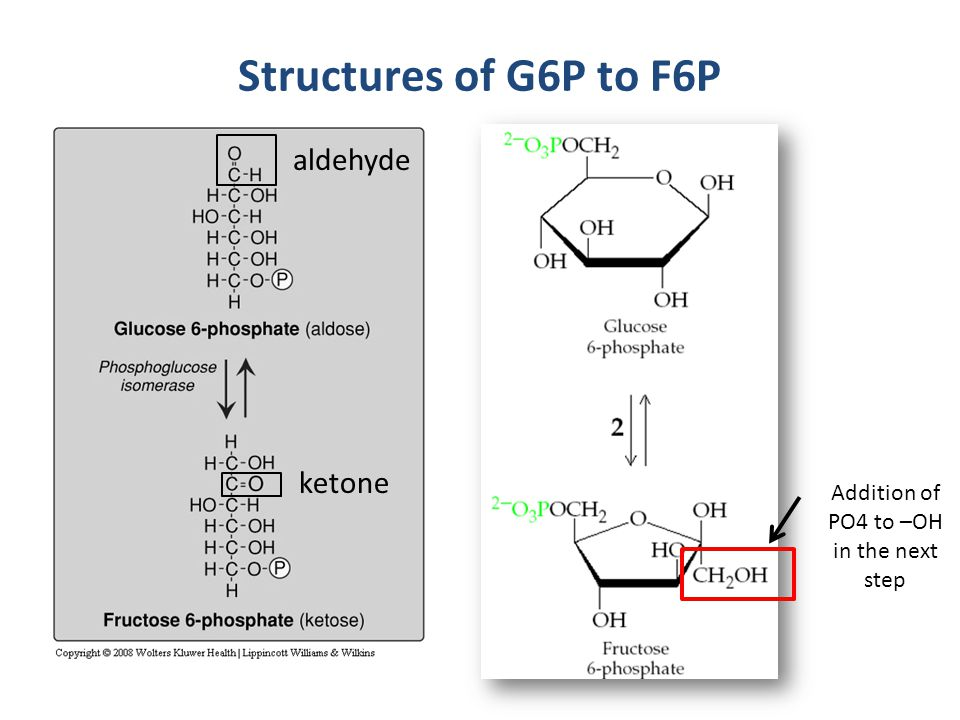 Structures of G6P to F6P aldehyde ketone Addition of PO4 to –OH in the next step