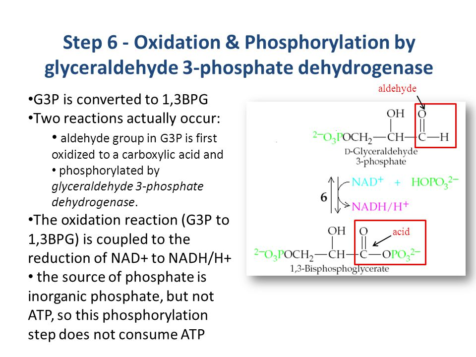 Step 6 - Oxidation & Phosphorylation by glyceraldehyde 3-phosphate dehydrogenase G3P is converted to 1,3BPG Two reactions actually occur: aldehyde group in G3P is first oxidized to a carboxylic acid and phosphorylated by glyceraldehyde 3-phosphate dehydrogenase.