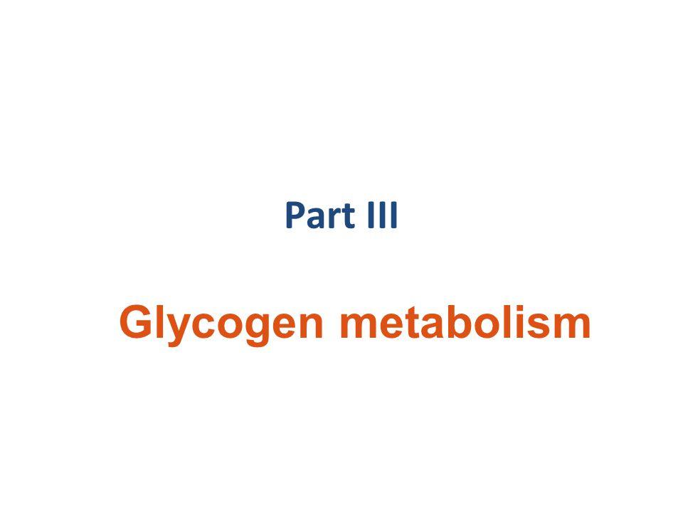 Part III Glycogen metabolism