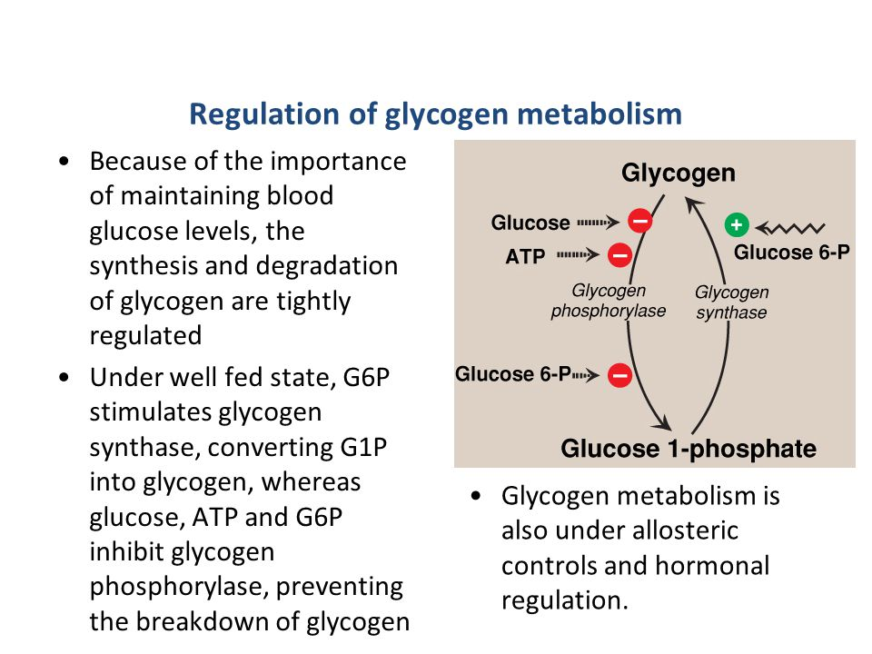 Regulation of glycogen metabolism Because of the importance of maintaining blood glucose levels, the synthesis and degradation of glycogen are tightly regulated Under well fed state, G6P stimulates glycogen synthase, converting G1P into glycogen, whereas glucose, ATP and G6P inhibit glycogen phosphorylase, preventing the breakdown of glycogen Glycogen metabolism is also under allosteric controls and hormonal regulation.