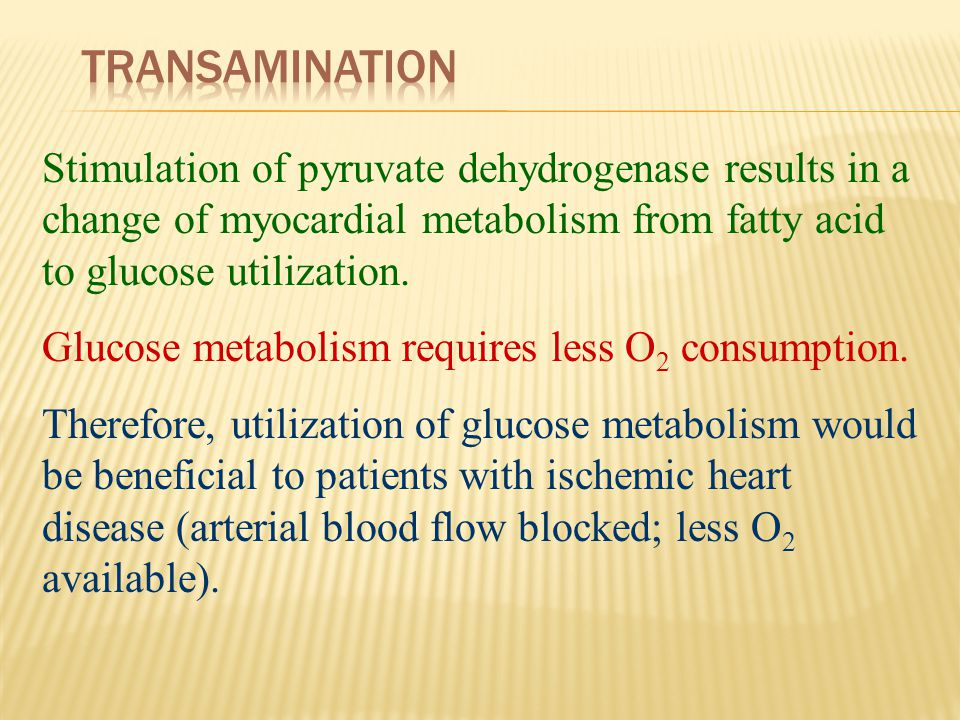 Stimulation of pyruvate dehydrogenase results in a change of myocardial metabolism from fatty acid to glucose utilization. Glucose metabolism requires