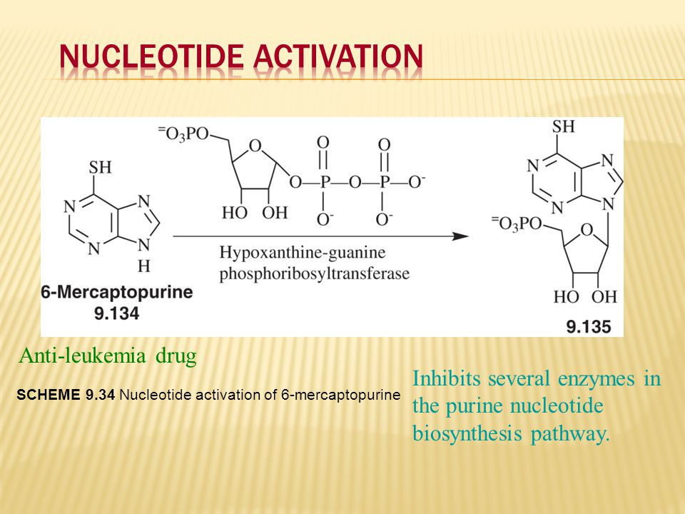Anti-leukemia drug Inhibits several enzymes in the purine nucleotide biosynthesis pathway. SCHEME 9.34 Nucleotide activation of 6-mercaptopurine