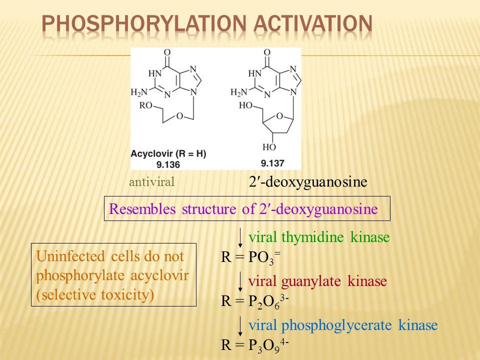 antiviral 2-deoxyguanosine Resembles structure of 2-deoxyguanosine R = PO 3 = viral guanylate kinase viral thymidine kinase R = P 2 O 6 3- viral phosp