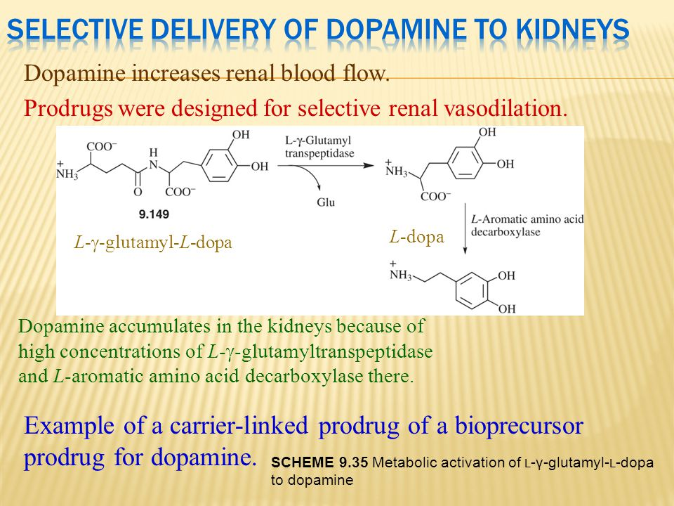 Dopamine increases renal blood flow. Prodrugs were designed for selective renal vasodilation. L-  -glutamyl-L-dopa Dopamine accumulates in the kidney