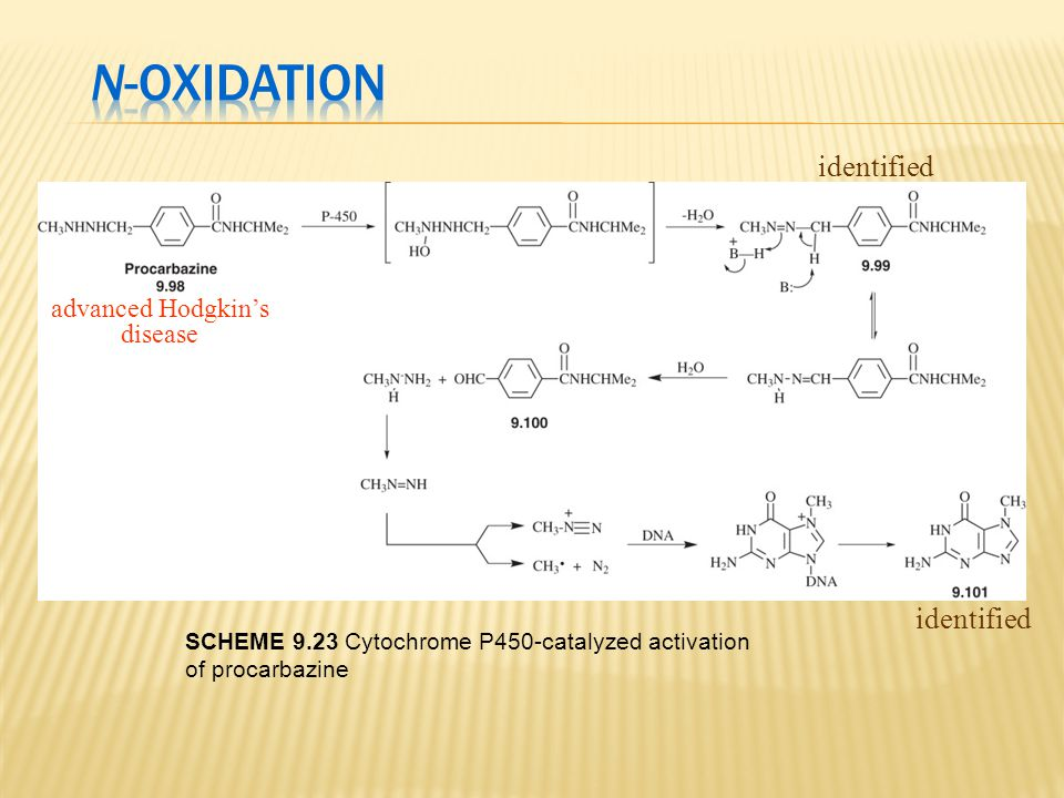 identified advanced Hodgkin's disease SCHEME 9.23 Cytochrome P450-catalyzed activation of procarbazine