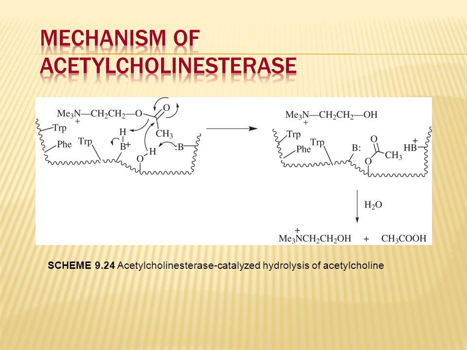 SCHEME 9.24 Acetylcholinesterase-catalyzed hydrolysis of acetylcholine