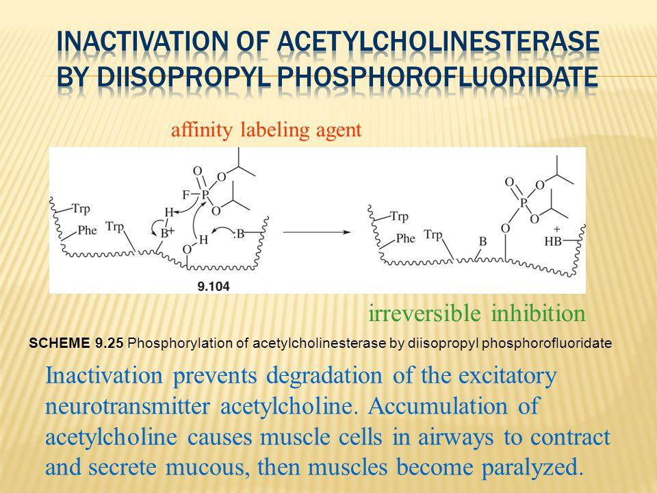 SCHEME 9.25 Phosphorylation of acetylcholinesterase by diisopropyl phosphorofluoridate affinity labeling agent irreversible inhibition Inactivation pr