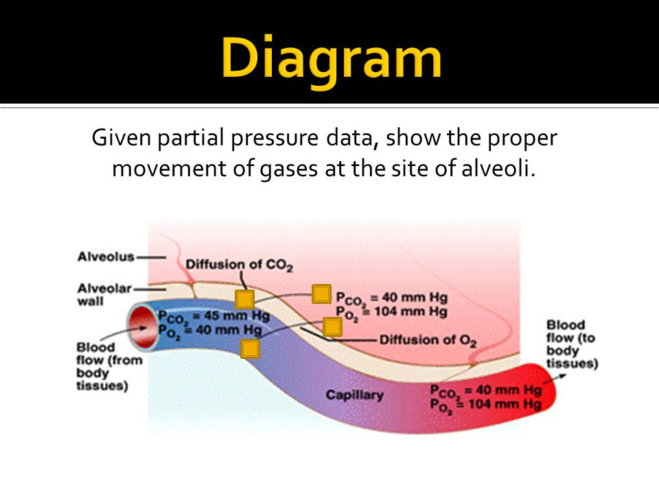 Given partial pressure data, show the proper movement of gases at the site of alveoli.