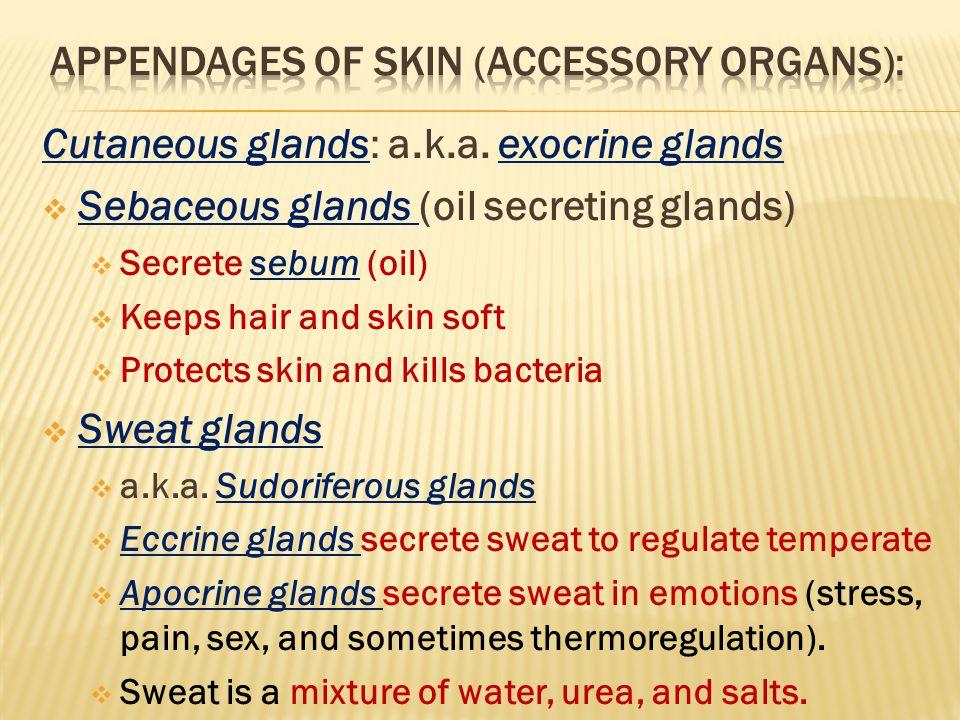 Cutaneous glands: a.k.a.