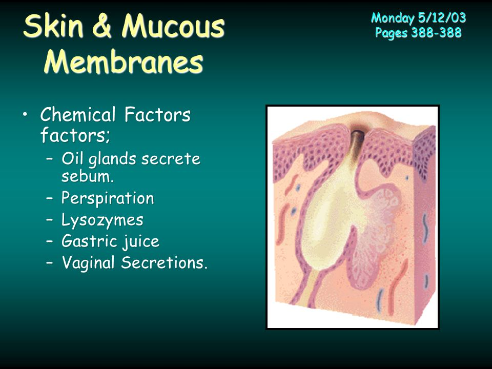 Skin & Mucous Membranes Chemical Factors factors;Chemical Factors factors; –Oil glands secrete sebum.