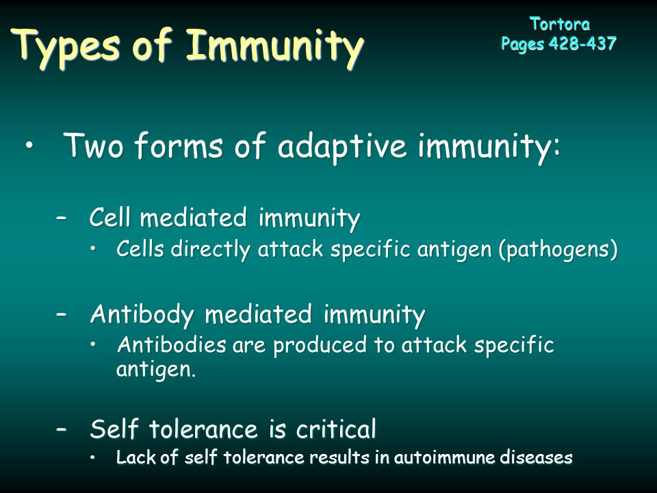 Types of Immunity Tortora Pages 428-437 Two forms of adaptive immunity:Two forms of adaptive immunity: –Cell mediated immunity Cells directly attack specific antigen (pathogens)Cells directly attack specific antigen (pathogens) –Antibody mediated immunity Antibodies are produced to attack specific antigen.Antibodies are produced to attack specific antigen.