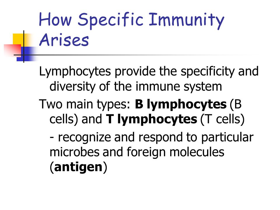 How Specific Immunity Arises - B cells secrete proteins (antibodies) to fight antigens - T and B cells can distinguish among antigens - each antigen has a particular molecular shape and stimulates certain B cells to secrete antibodies that interact with it