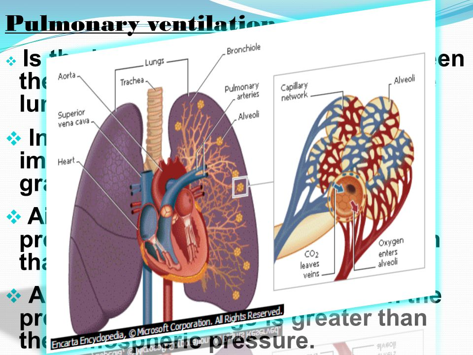 Pulmonary ventilation  Is the inflow and outflow of air between the atmosphere and the alveoli of the lungs.