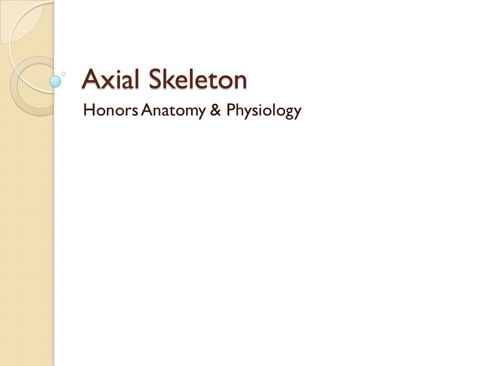 Axial Skeleton Honors Anatomy & Physiology
