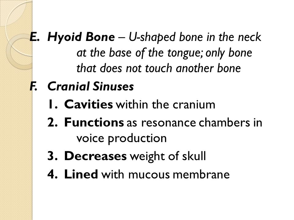 E.Hyoid Bone – U-shaped bone in the neck at the base of the tongue; only bone that does not touch another bone F.Cranial Sinuses 1. Cavities within th