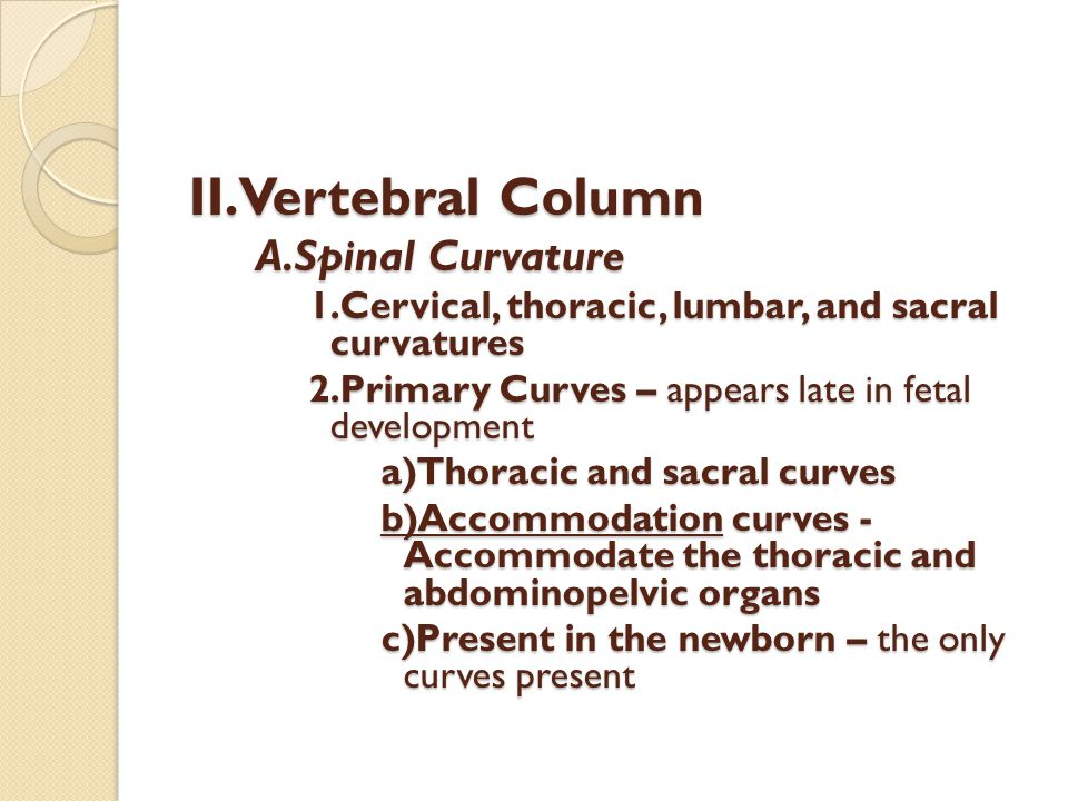 II.Vertebral Column A.Spinal Curvature 1.Cervical, thoracic, lumbar, and sacral curvatures 2.Primary Curves – appears late in fetal development a)Thor