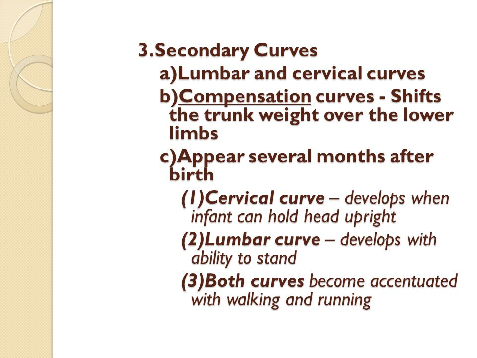 3.Secondary Curves a)Lumbar and cervical curves b)Compensation curves - Shifts the trunk weight over the lower limbs c)Appear several months after bir