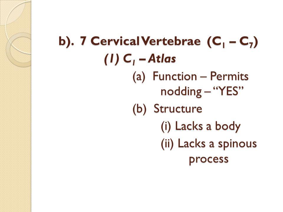"b). 7 Cervical Vertebrae (C 1 – C 7 ) (1) C 1 – Atlas (a) Function – Permits nodding – ""YES"" (b) Structure (i) Lacks a body (ii) Lacks a spinous proce"