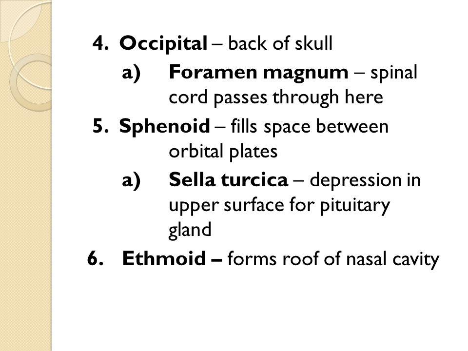 7.Sutures – unite bones of the cranium a) Coronal suture: between frontal and parietal bones b) Sagittal suture: between right and left parietal bones c) Lambdoidal suture: between parietal and occipital bones d) Squamous suture: between temporal and parietal bones