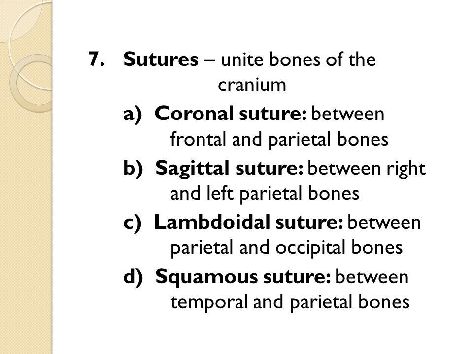 7.Sutures – unite bones of the cranium a) Coronal suture: between frontal and parietal bones b) Sagittal suture: between right and left parietal bones