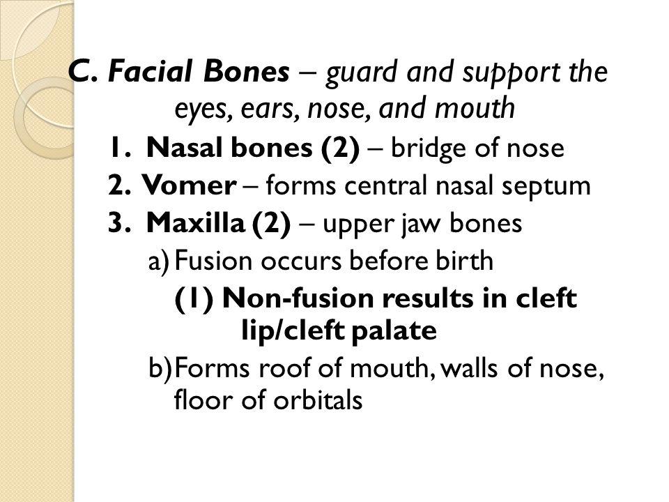 4.Mandible – lower jawbone a) Ramus b) Mental foramen 5.
