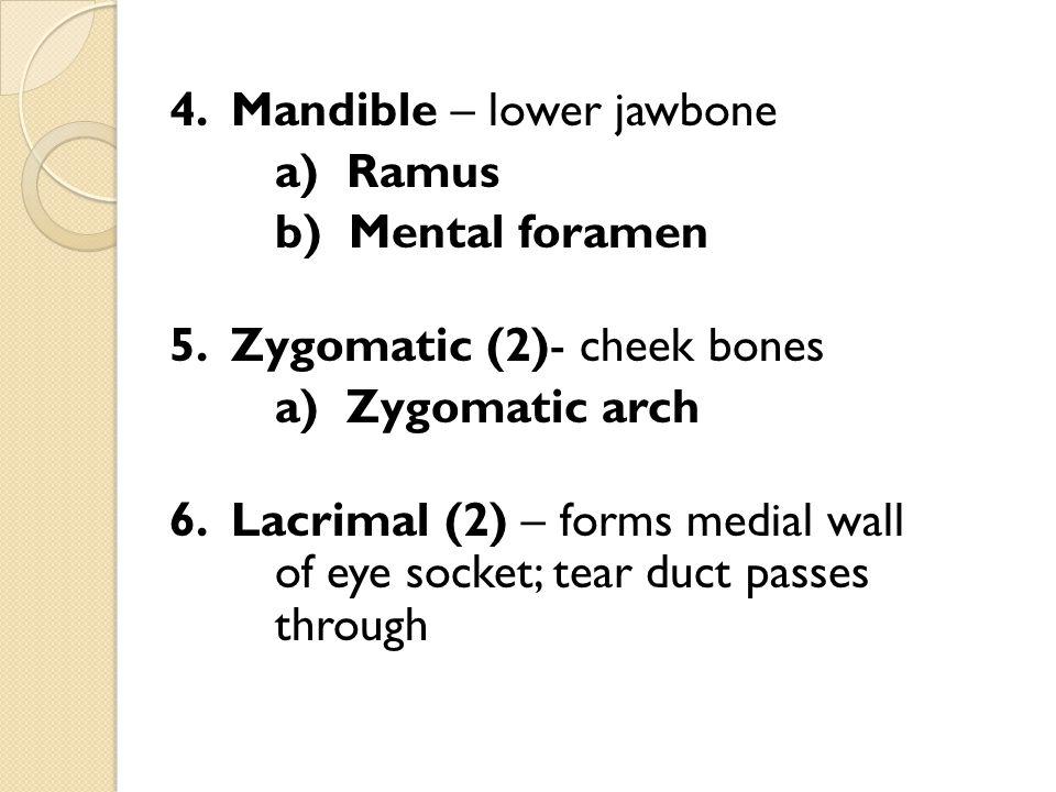 4. Mandible – lower jawbone a) Ramus b) Mental foramen 5. Zygomatic (2)- cheek bones a) Zygomatic arch 6. Lacrimal (2) – forms medial wall of eye sock