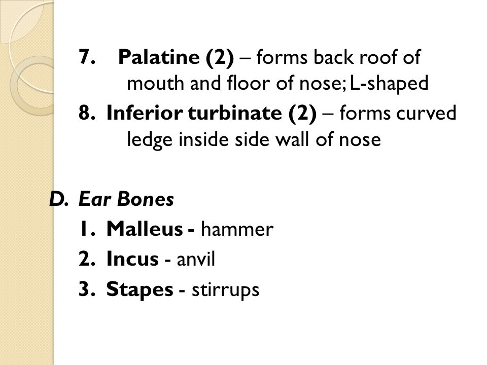 E.Hyoid Bone – U-shaped bone in the neck at the base of the tongue; only bone that does not touch another bone F.Cranial Sinuses 1.