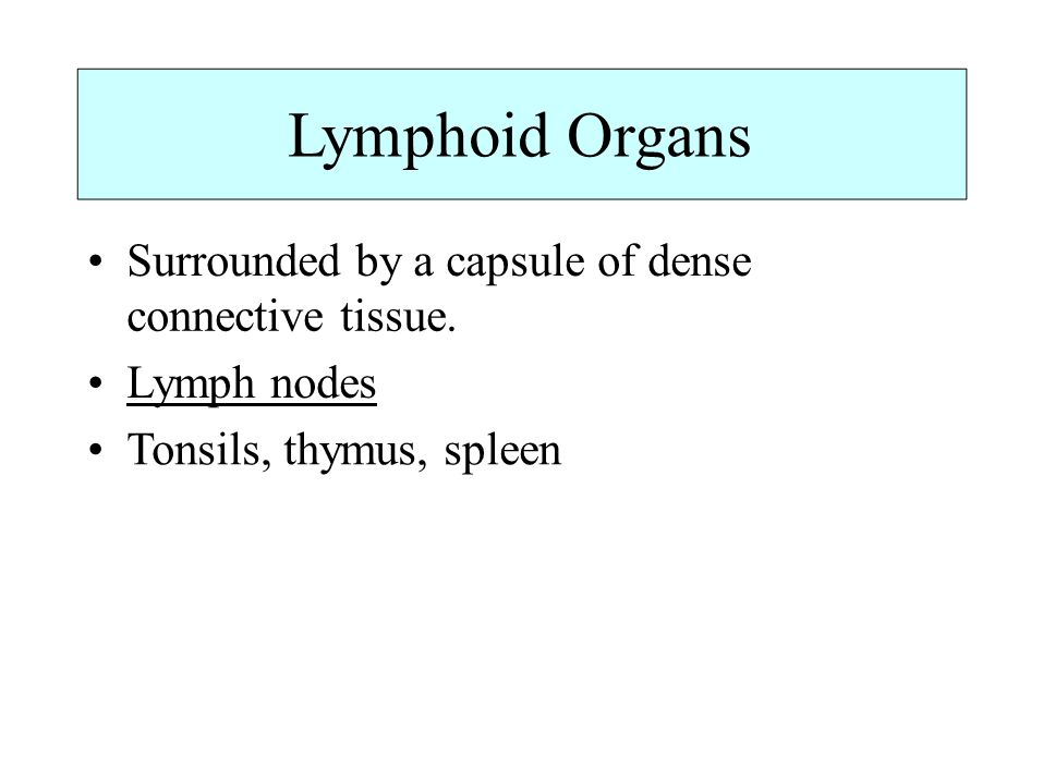 Lymphoid Organs Surrounded by a capsule of dense connective tissue. Lymph nodes Tonsils, thymus, spleen