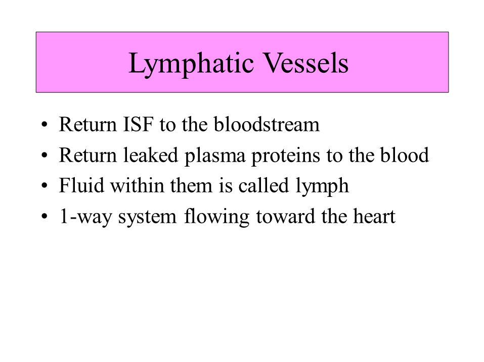 Lymphatic Vessels Return ISF to the bloodstream Return leaked plasma proteins to the blood Fluid within them is called lymph 1-way system flowing towa