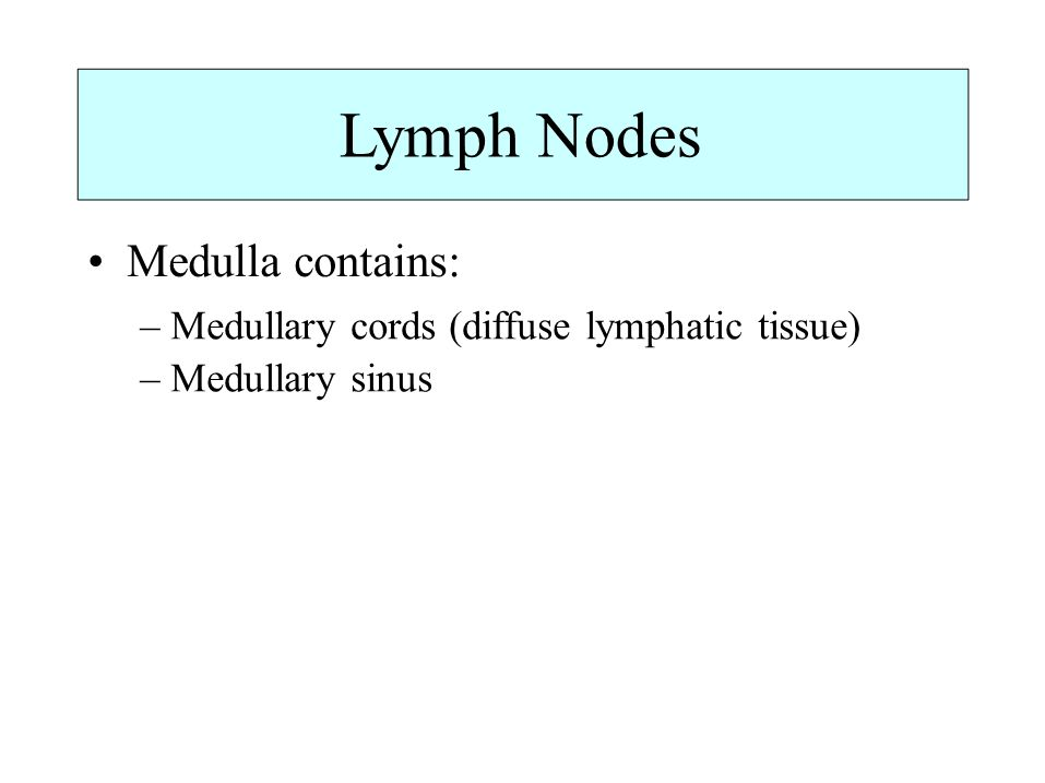 Lymph Nodes Medulla contains: – Medullary cords (diffuse lymphatic tissue) – Medullary sinus