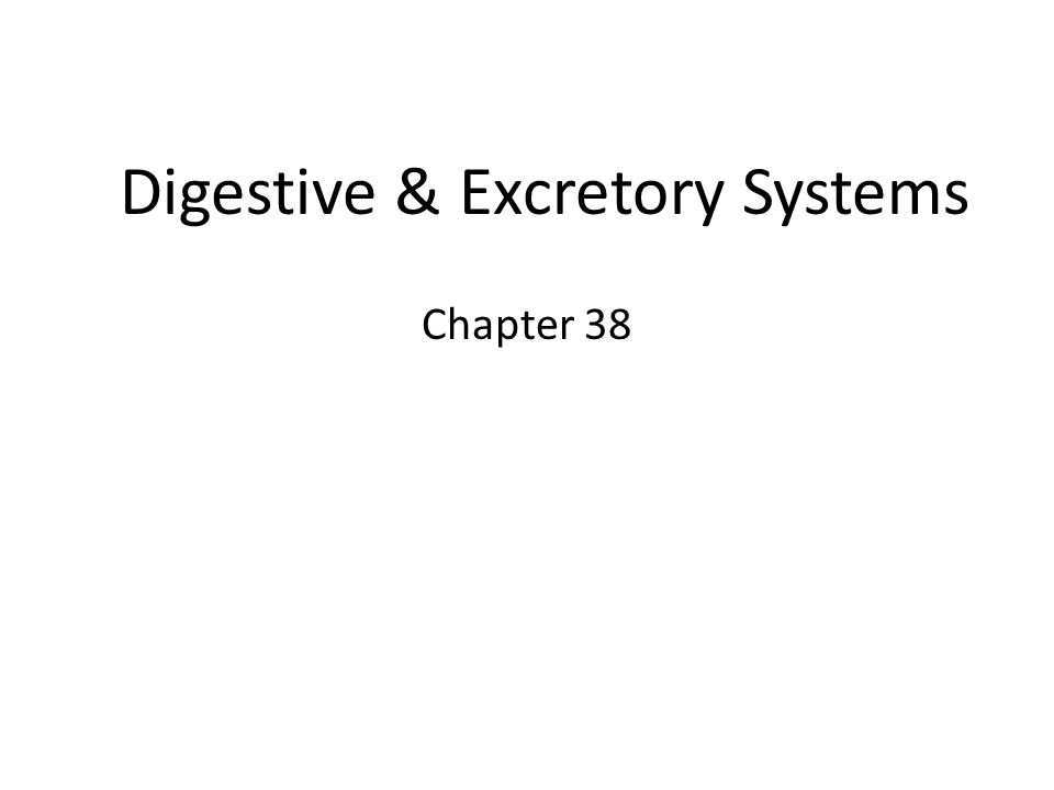 Digestive & Excretory Systems Chapter 38