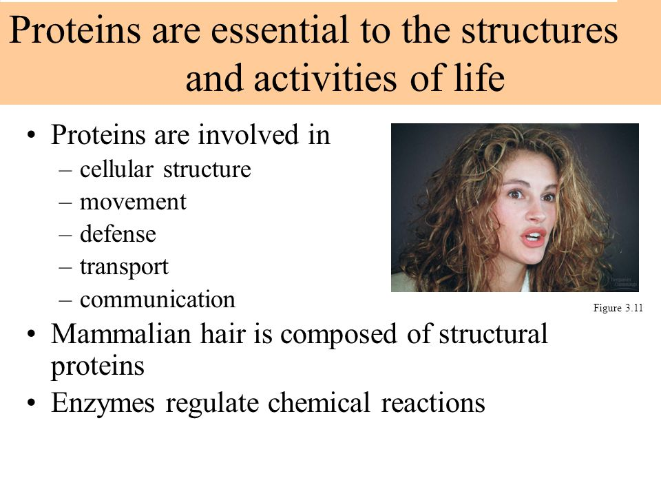 Proteins are involved in –cellular structure –movement –defense –transport –communication Mammalian hair is composed of structural proteins Enzymes re