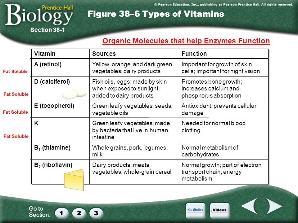 Go to Section: Figure 38–6 Types of Vitamins Vitamin A (retinol) D (calciferol) E (tocopherol) K B 1 (thiamine) B 2 (riboflavin) Vitamin A (retinol) D