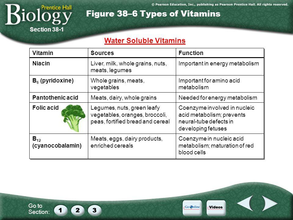 Go to Section: Figure 38–6 Types of Vitamins Vitamin Niacin B 6 (pyridoxine) Pantothenic acid Folic acid B 12 (cyanocobalamin) Vitamin Niacin B 6 (pyr