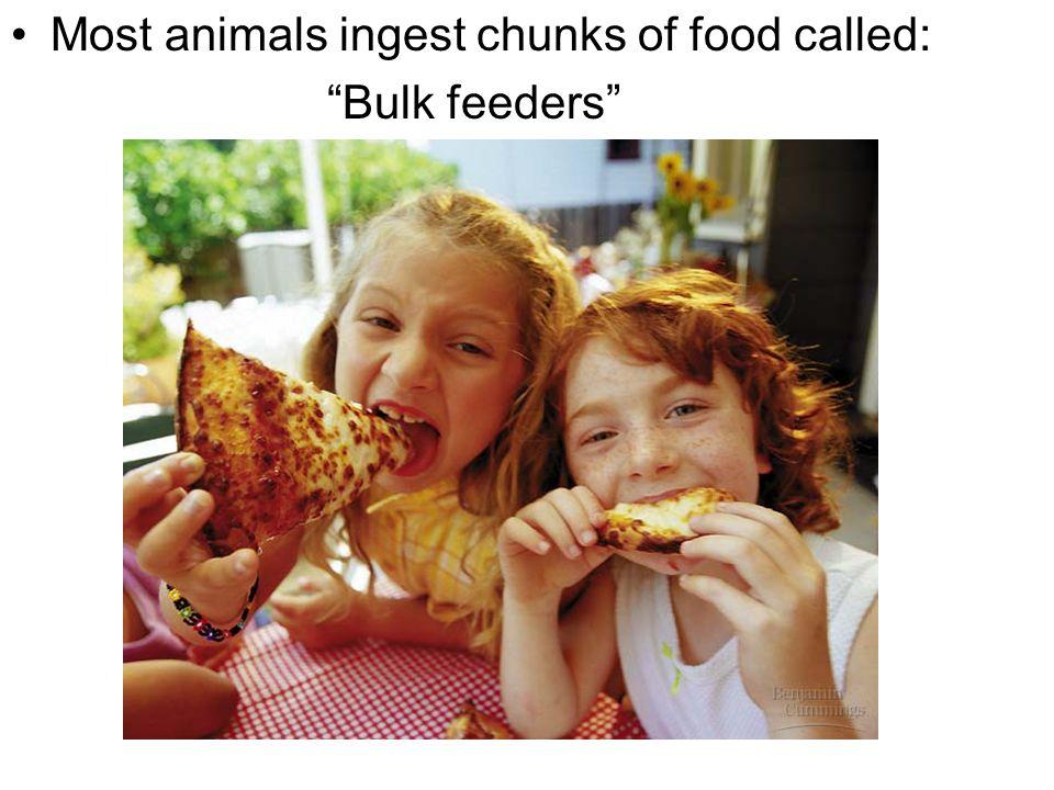 "Most animals ingest chunks of food called: ""Bulk feeders"" Figure 21.1E"