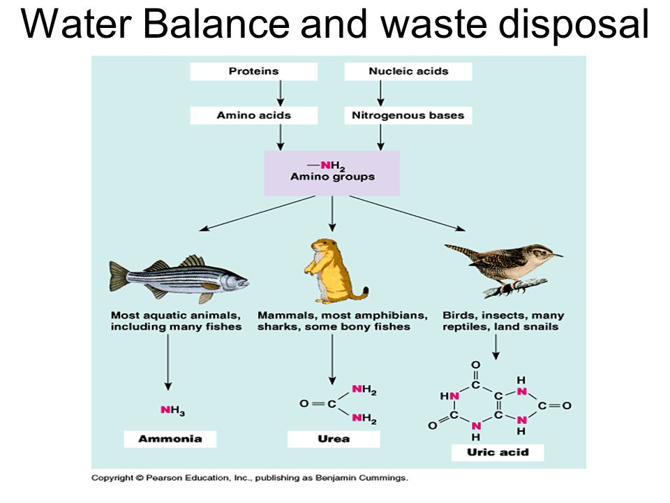 Water Balance and waste disposal