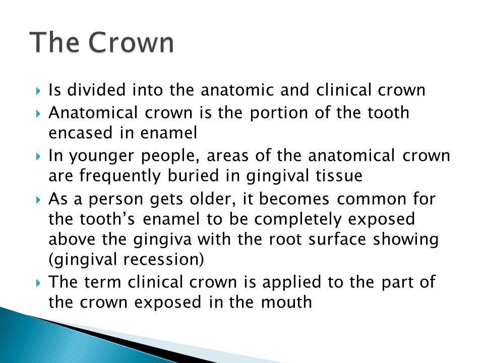  Is divided into the anatomic and clinical crown  Anatomical crown is the portion of the tooth encased in enamel  In younger people, areas of the a